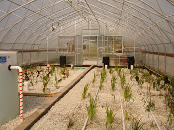 Greenhouse at Hundredfold Farm